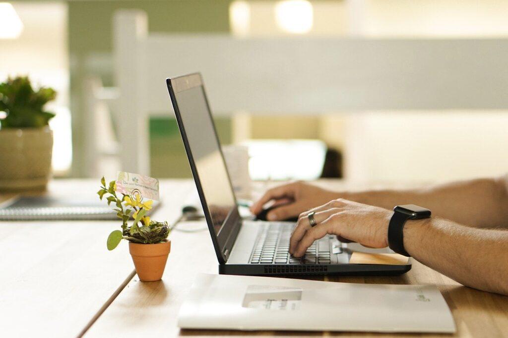 plant, workstation, laptop